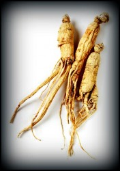 Use ginseng to boost nitric oxide levels and erection quality
