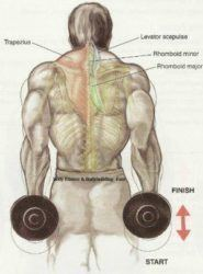 Cobra back workout routine and exercises