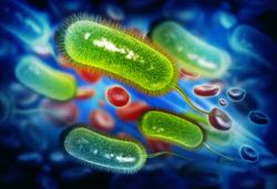 the negative effects and safety of probiotics and fermented foods