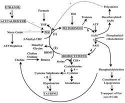 low-testosterone-metabolism
