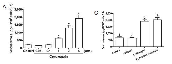 cordyceps testosterone study