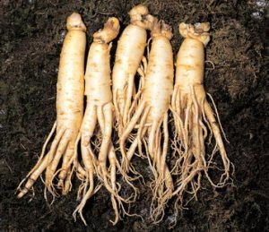 Ginseng is a great erectile dysfunction supplement.