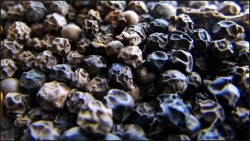 how piperine works and why it boosts absorption