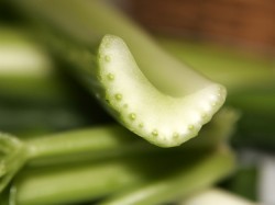 celery is a aromatase enzyme inhibiting food