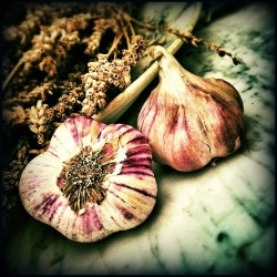 Garlic and vitamin c boosts Nitric Oxide synthase