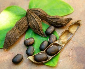 Mucuna pruriens and l-dopa increase androgen receptor activator