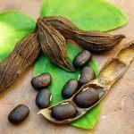 mucuna pruriens and testosterone a source of l dopa