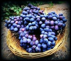 Grape seed extract is a herbal testosterone booster