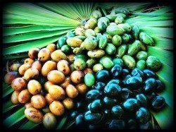 Saw palmetto herbal testosterone booster