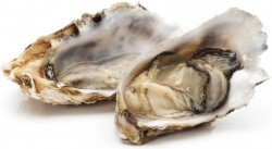 oysters increase testosterone production