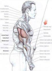Build Bigger Triceps And Biceps With Research Proven Exercises