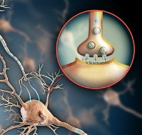 how does nefiracetam work