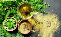 moringa oleifera testosterone levels