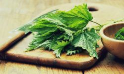 stinging nettle and testosterone