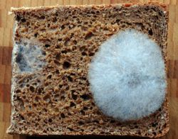 mold on a piece of bread